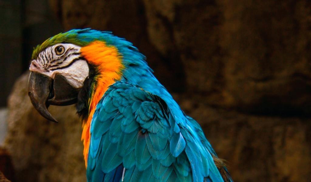 Parrot Wallpaper Parrot Wallpaper Hd Free Download Parrot