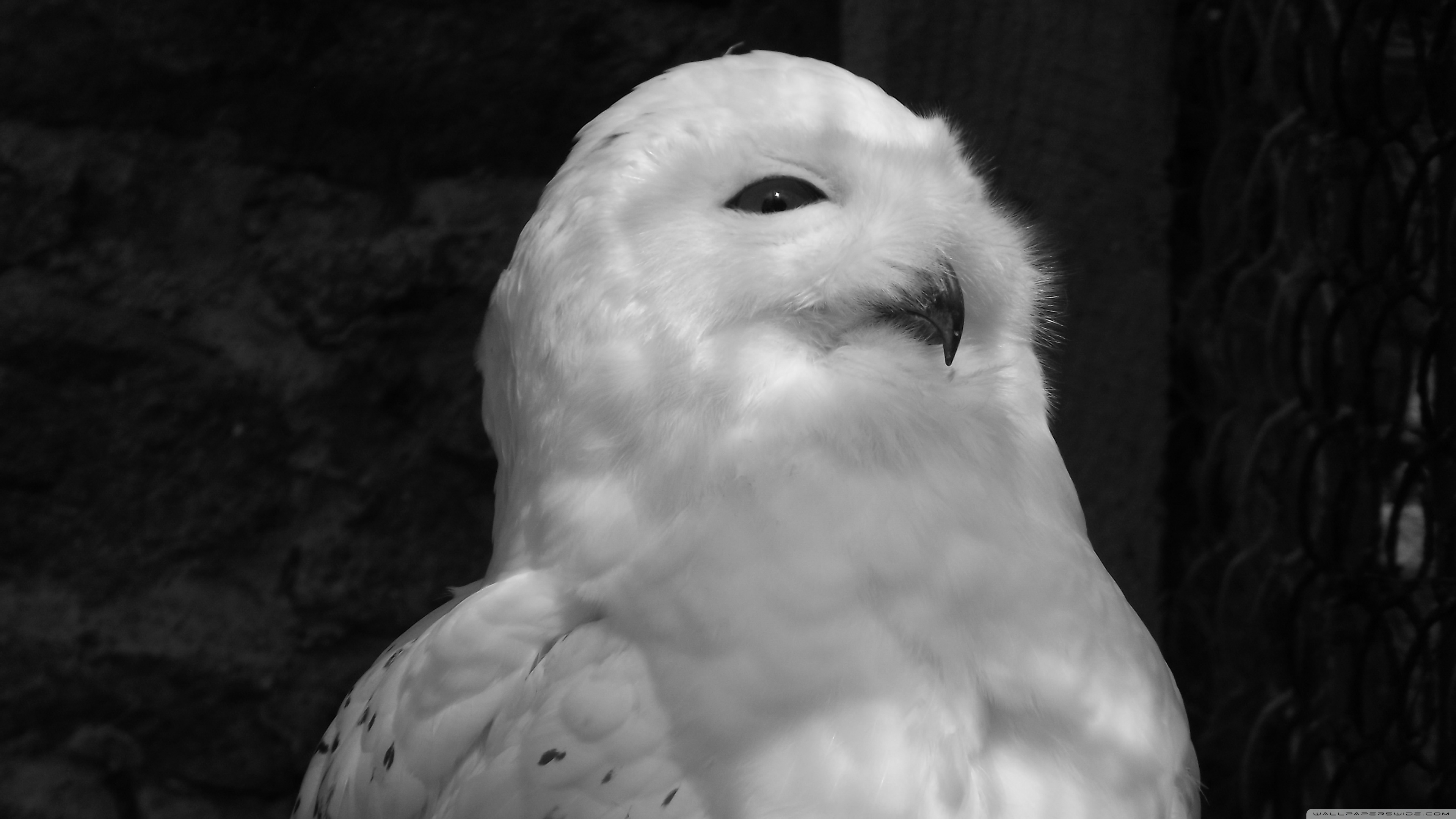 Owl Black And White 2041844 Hd Wallpaper Backgrounds Download