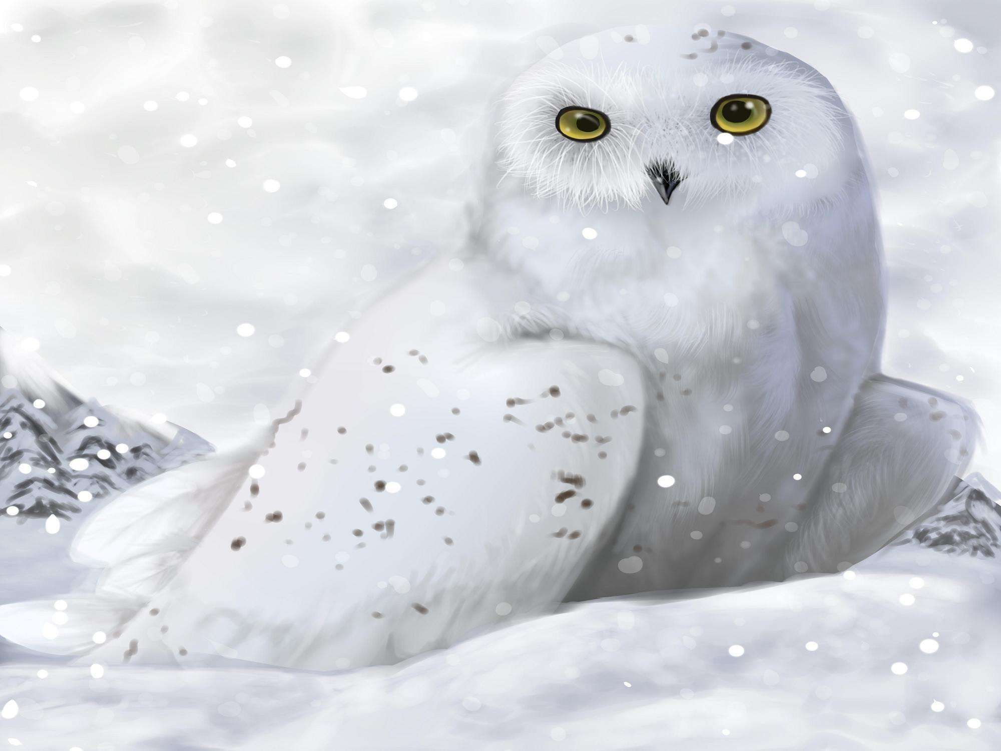 White Winter Owl Wallpapers Hd Wallpapers Hd Winter