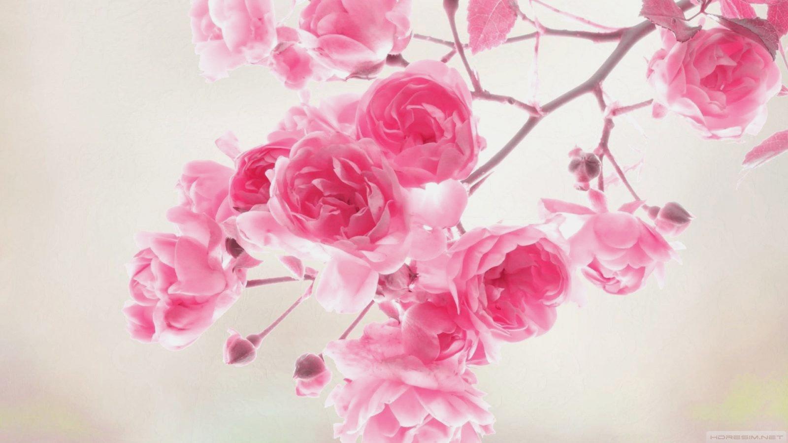 85 Desktop Wallpaper Hd Backgrounds 3d Anime Wallpaper - Asus Wallpaper Flowers , HD Wallpaper & Backgrounds