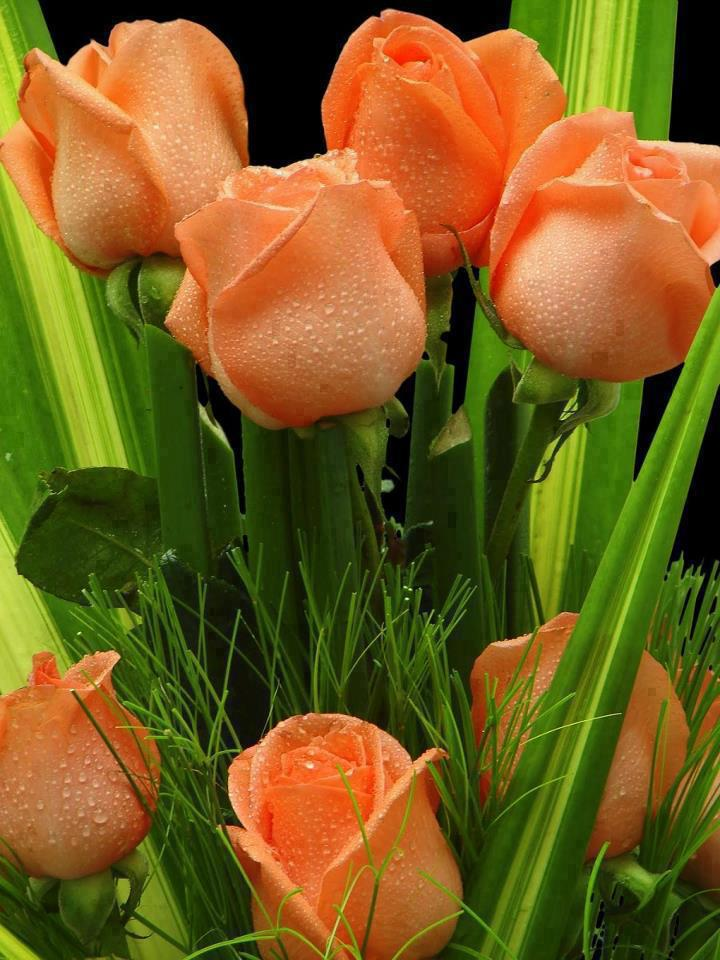 204 2047649 happy friday with flowers