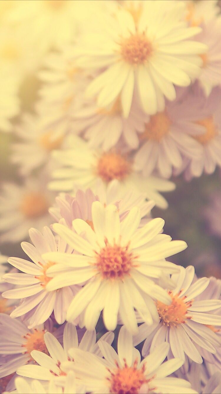 Sunny Daisy Wallpaper For Your Iphone Xs Max From Everpix - Flower Wallpaper Iphone Xs Max , HD Wallpaper & Backgrounds