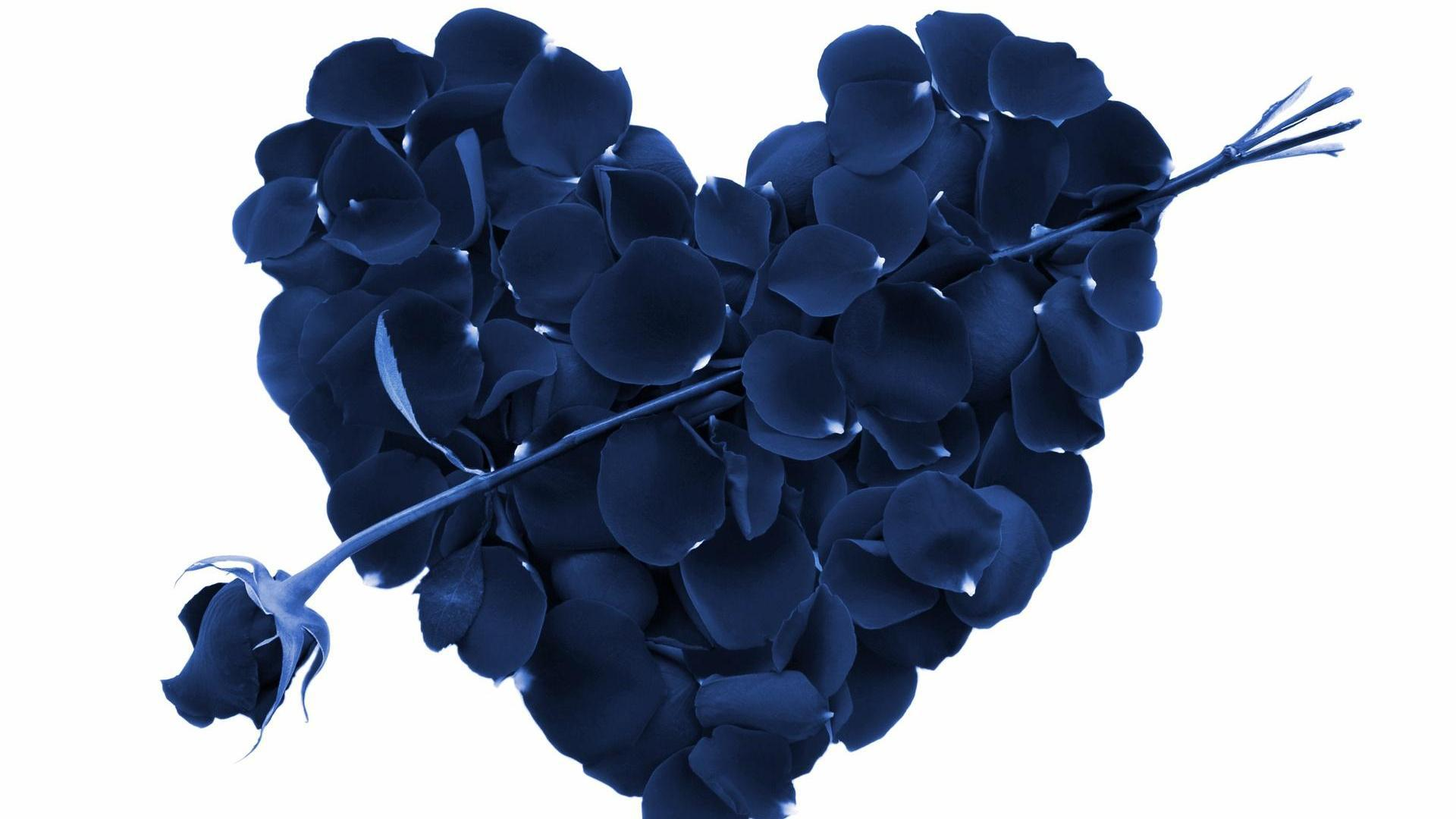 Blue Rose And A Heart Made Of Rose Petals Wallpapers - Love Valentines Day , HD Wallpaper & Backgrounds
