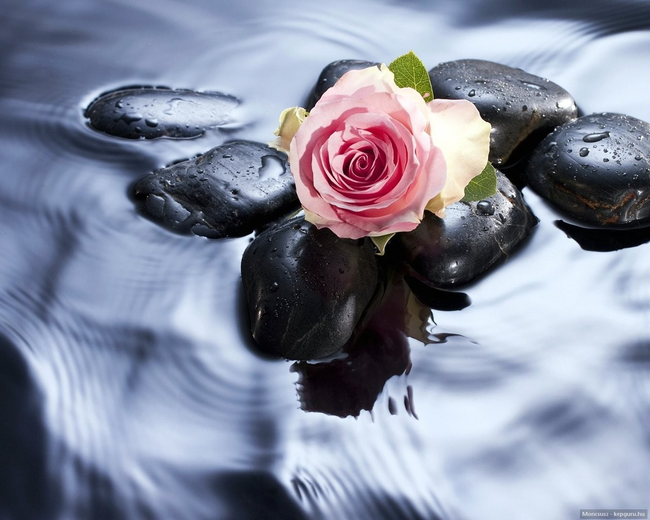 Beautiful Roses In Water , HD Wallpaper & Backgrounds