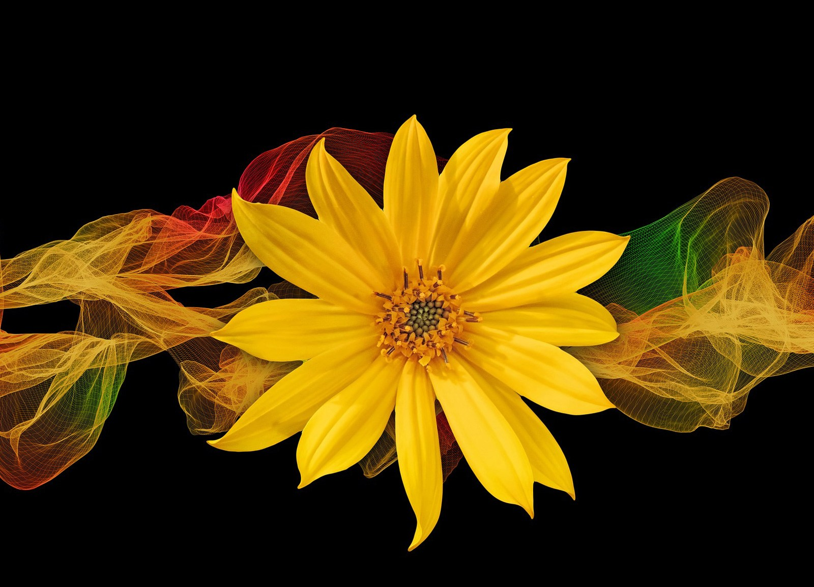 Wallpaper Fiori Gialli.Flower Meanings In Dreams Fiori Gialli Su Sfondo Nero 2056308
