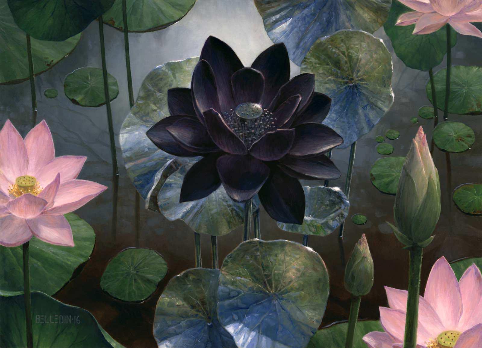 Steven Belledin S Black Lotus Mtg Black Lotus Art 2056912 Hd Wallpaper Backgrounds Download