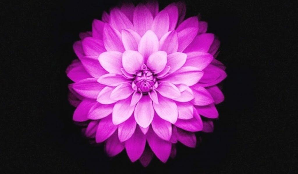 Download By Size - Lock Screen Flower Wallpaper Iphone , HD Wallpaper & Backgrounds
