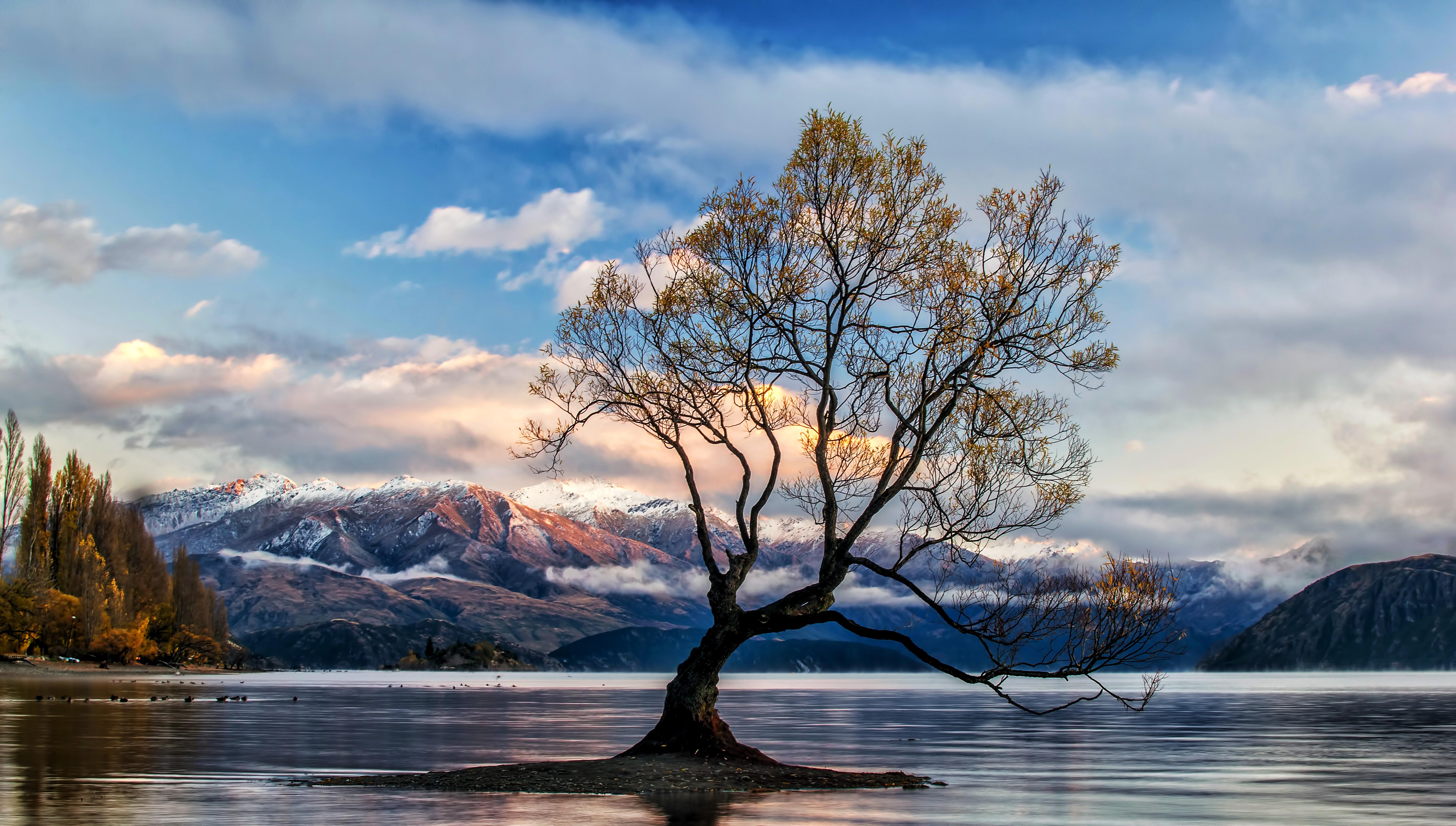 Hd Wallpaper - New Zealand Nature Hd , HD Wallpaper & Backgrounds