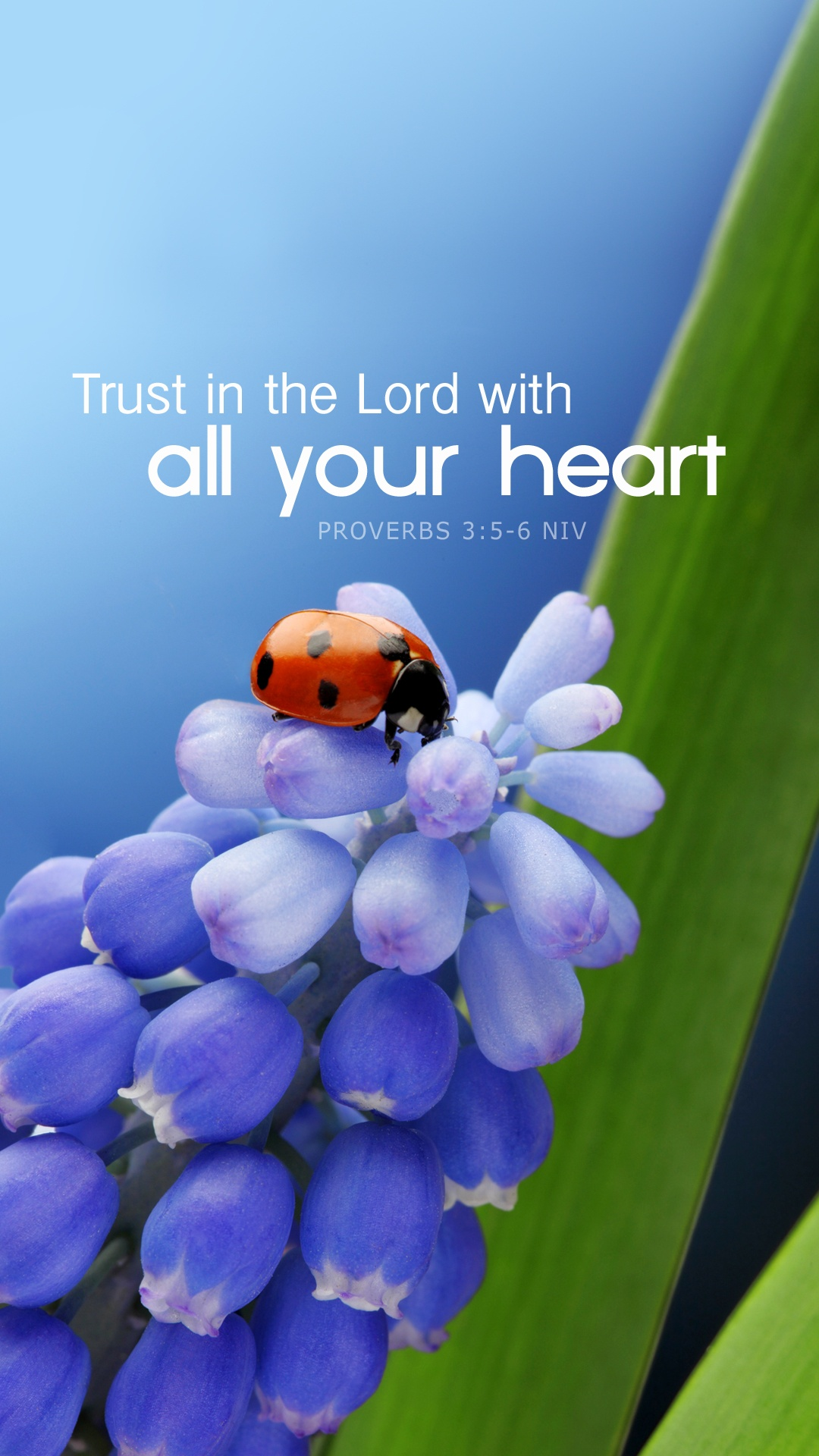 Ladybug Wallpaper Free - Trust In The Lord With All Your Heart Mobile , HD Wallpaper & Backgrounds