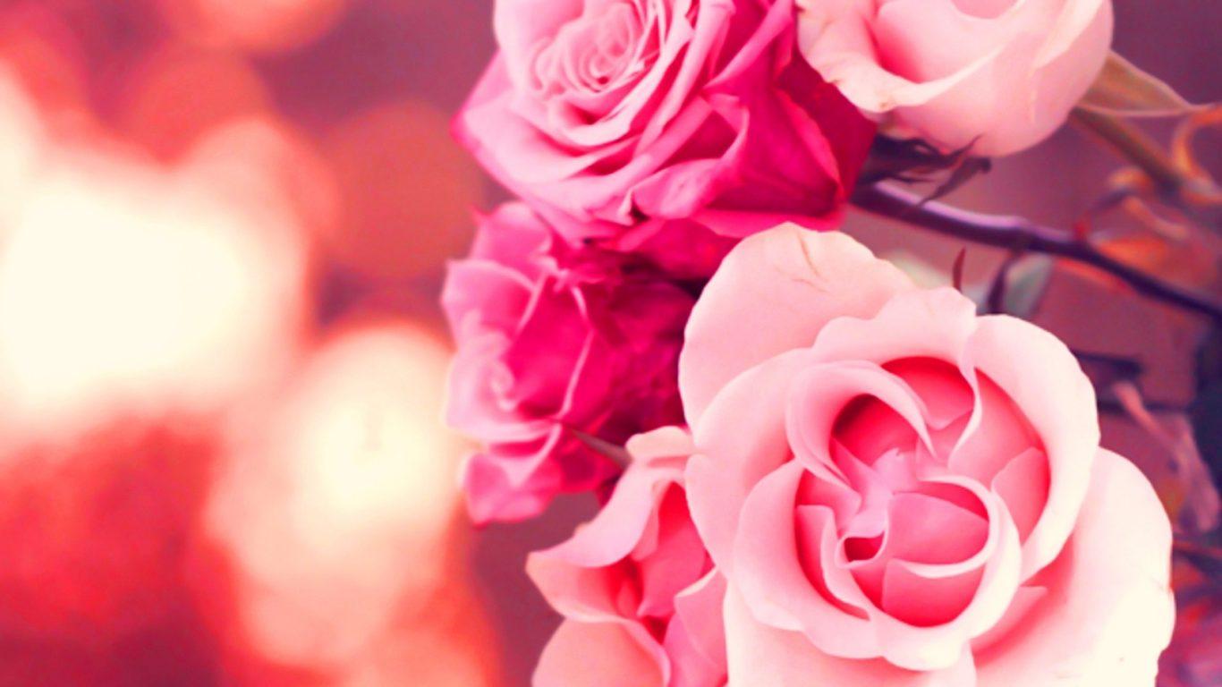 Pink Flower Rose Landscapes Flowers Nature Roses Wallpapers - Hintergrundbilder Hd Rosen , HD Wallpaper & Backgrounds