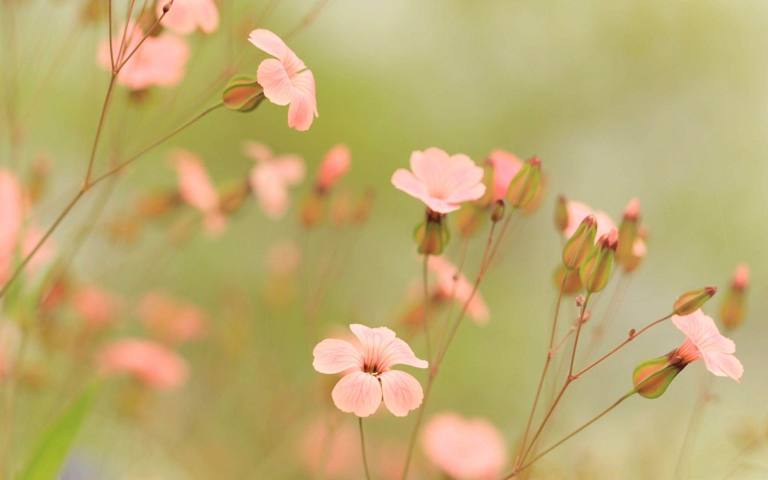 Summer Flowers Wallpapers - Summer Flowers Desktop Background , HD Wallpaper & Backgrounds