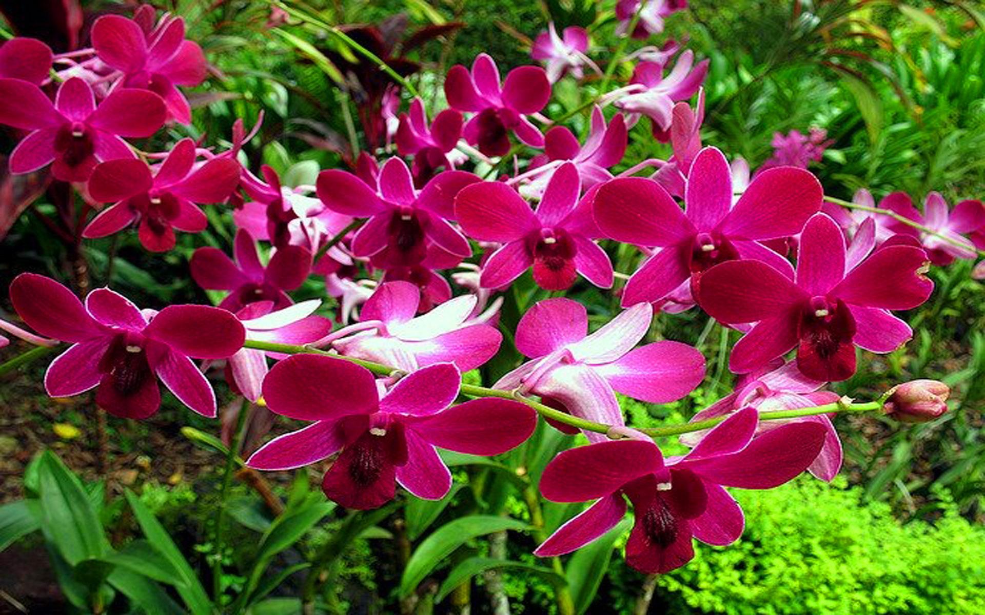 Tropical Forest Orchids Tropical Rainforest 2085389 Hd