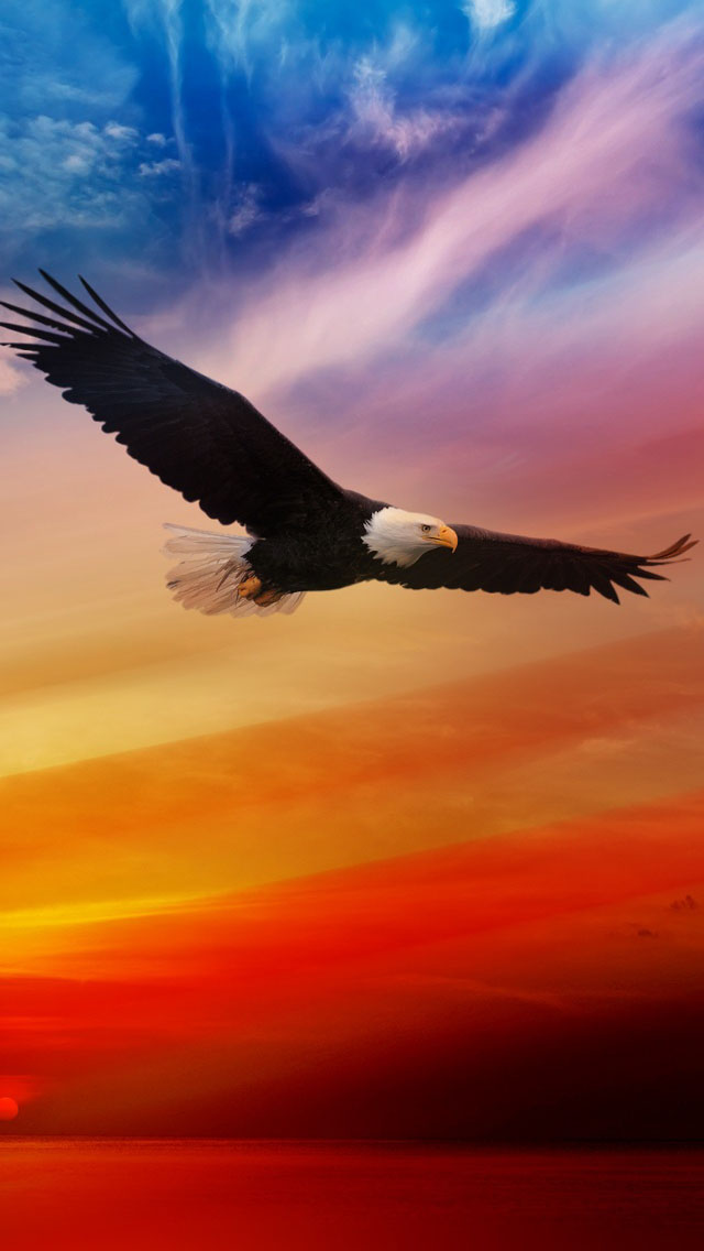 Bald Eagle Wallpaper Iphone 2090592 Hd Wallpaper Backgrounds Download