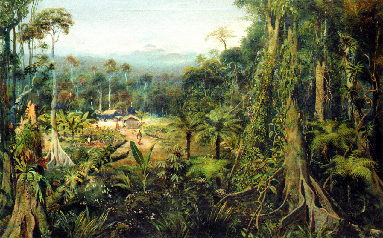 Tropical Forest Trail Paintings 2105382 Hd Wallpaper