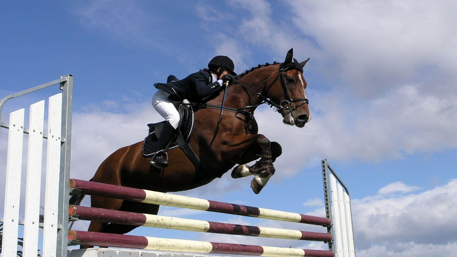 Horseback Riding Wallpaper Show Jumping 2106399 Hd Wallpaper Backgrounds Download