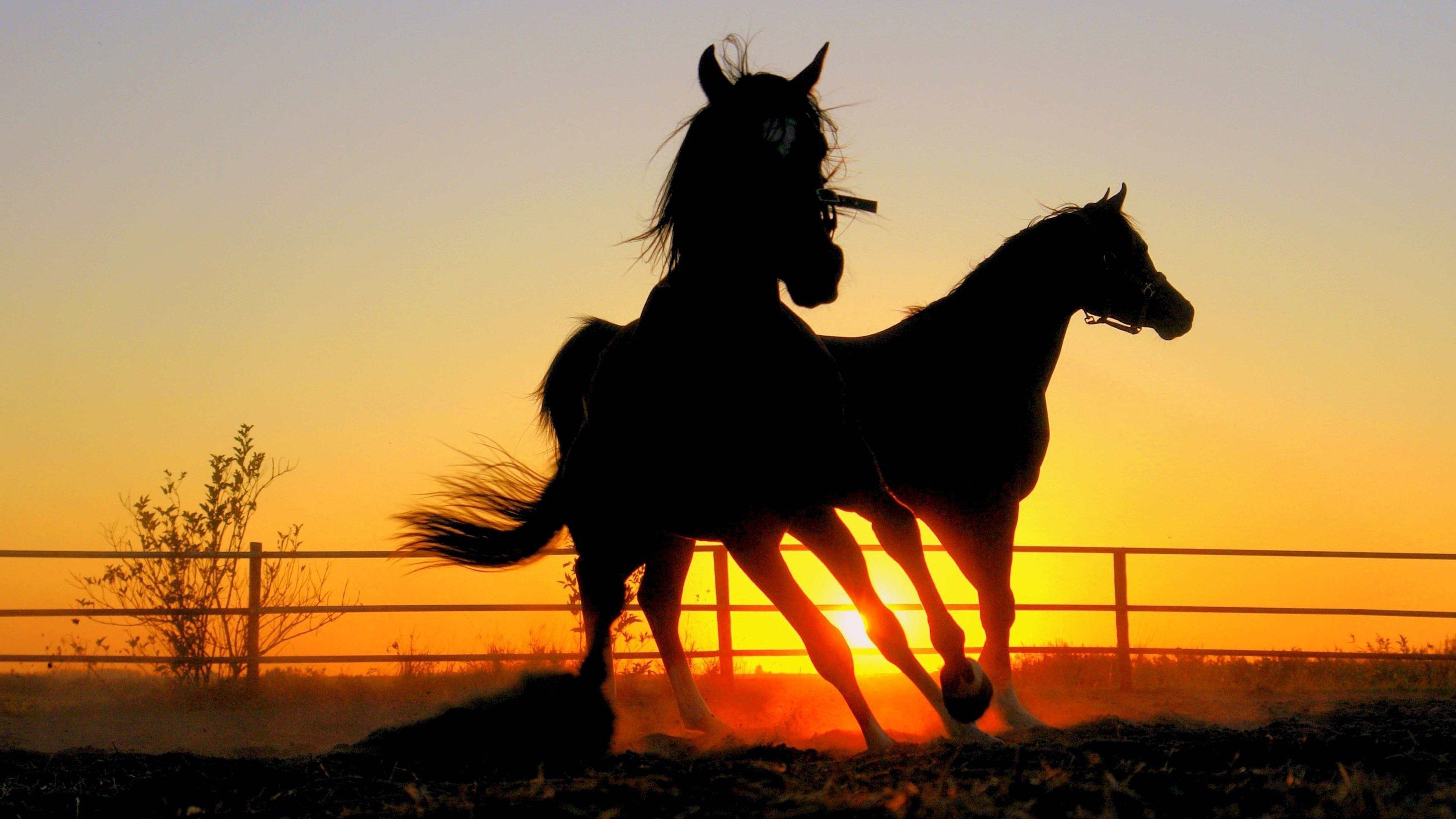 Free Black Horse Picture Background Photos Mac Wallpapers