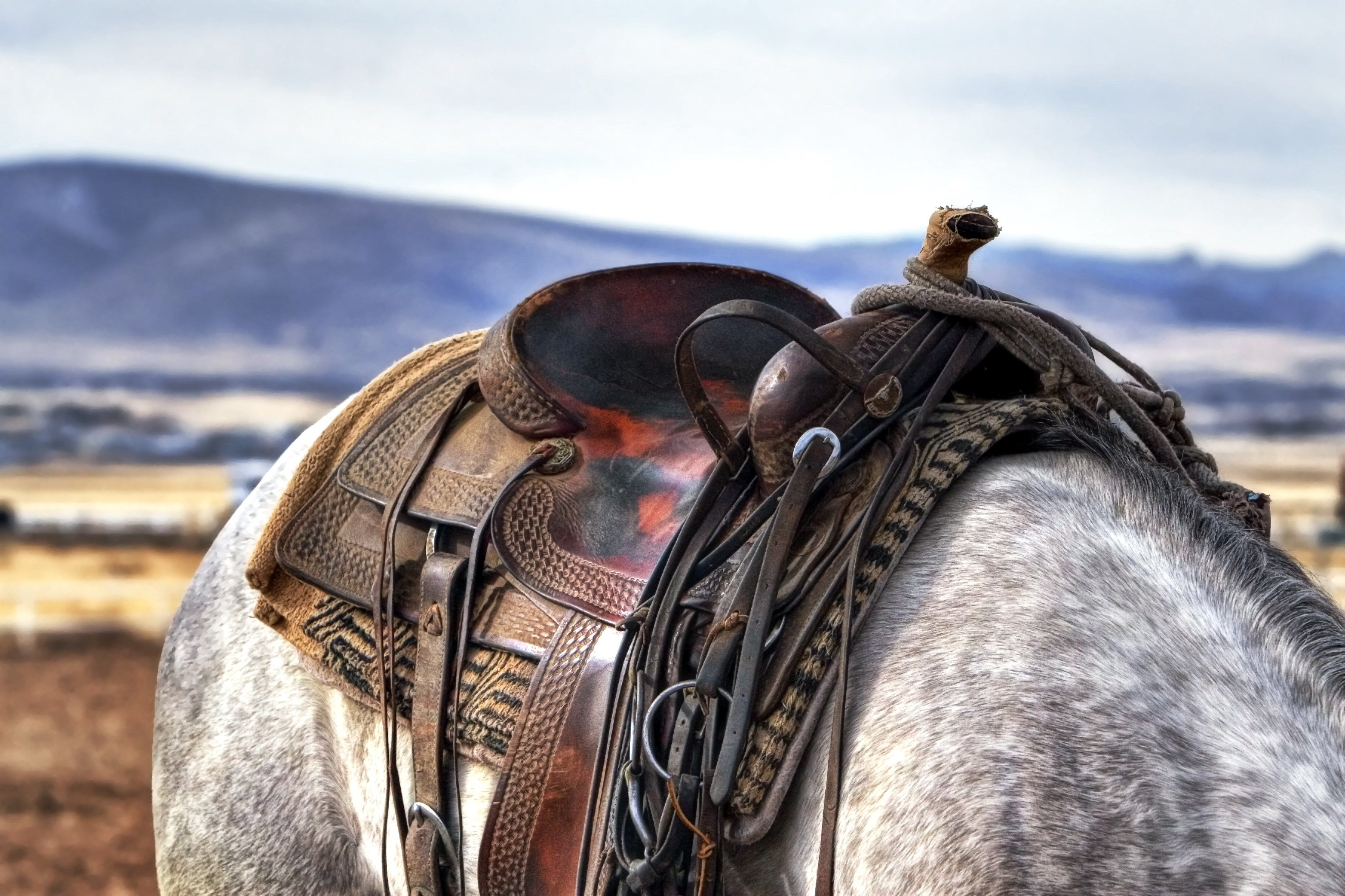 Horse Riding Hd Wallpapers Desktop Background Western Saddle 2106659 Hd Wallpaper Backgrounds Download