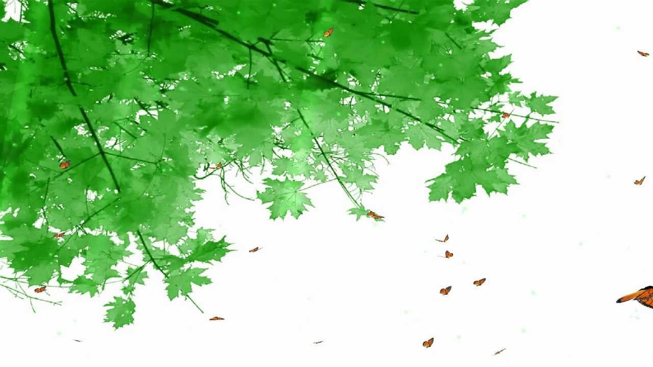 Animated Butterfly Wallpaper - Blue Leaves , HD Wallpaper & Backgrounds