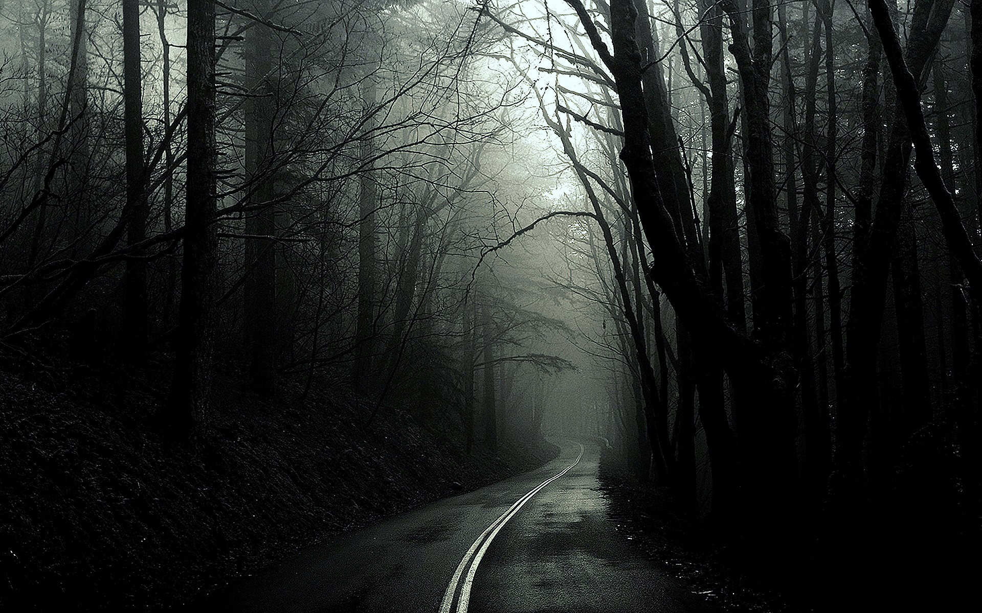 Amazing Black And White Forest Background Into The Mist Hd