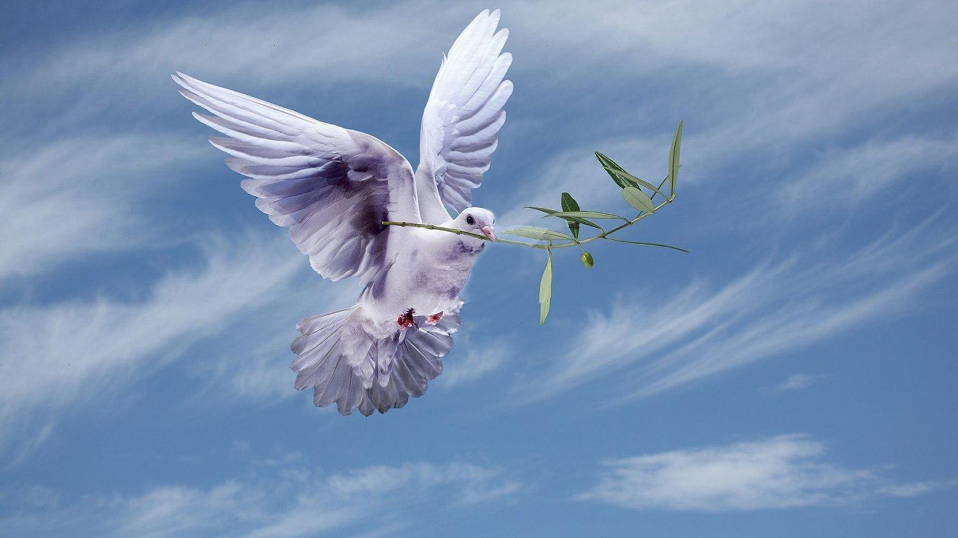 Landscape Portrait - Peace Dove With Olive Branch , HD Wallpaper & Backgrounds