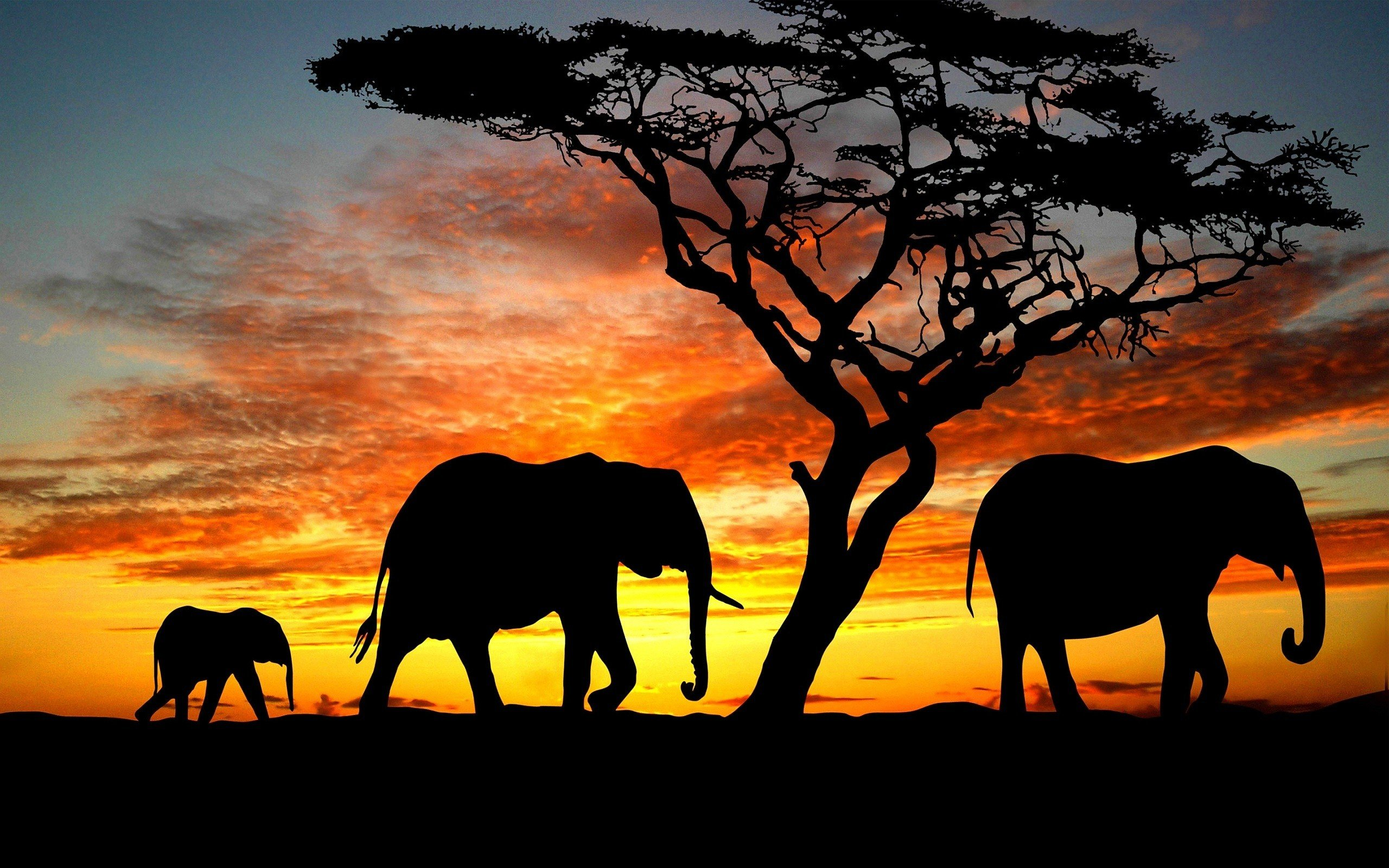 Beauty Cute Amazing Animal Elephant Family During