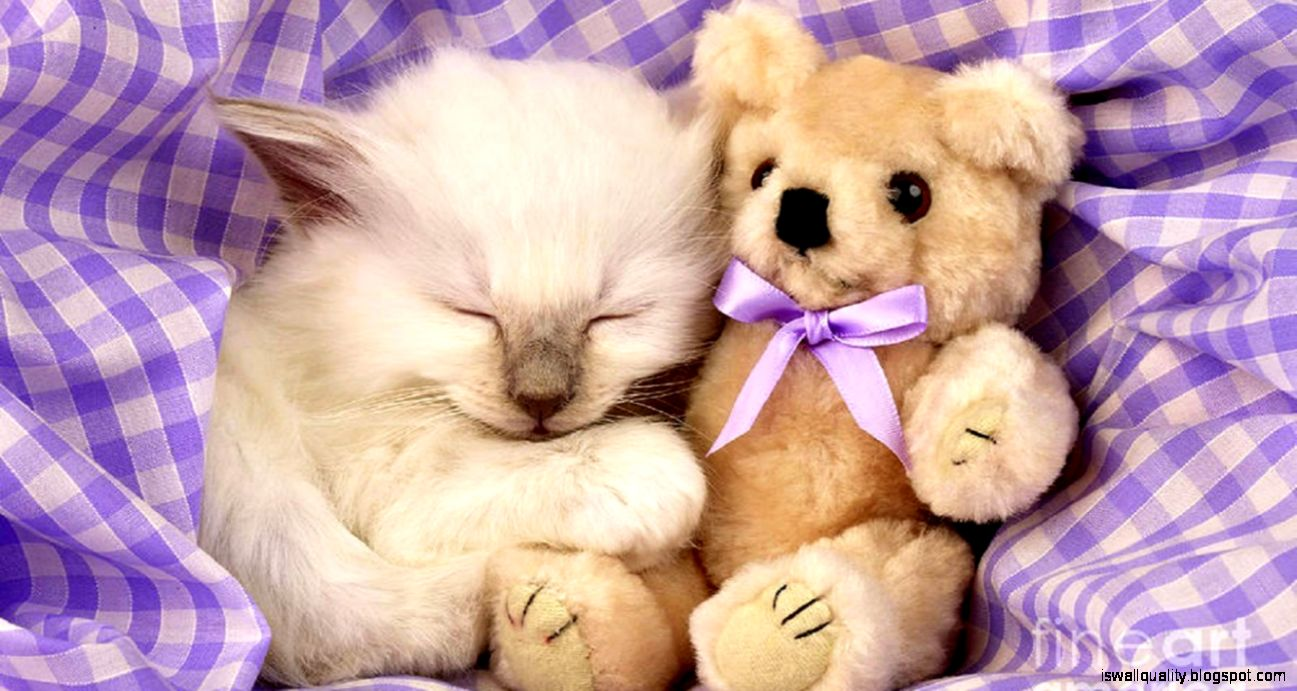 View Original Size - Cool Backgrounds Of Kittens , HD Wallpaper & Backgrounds