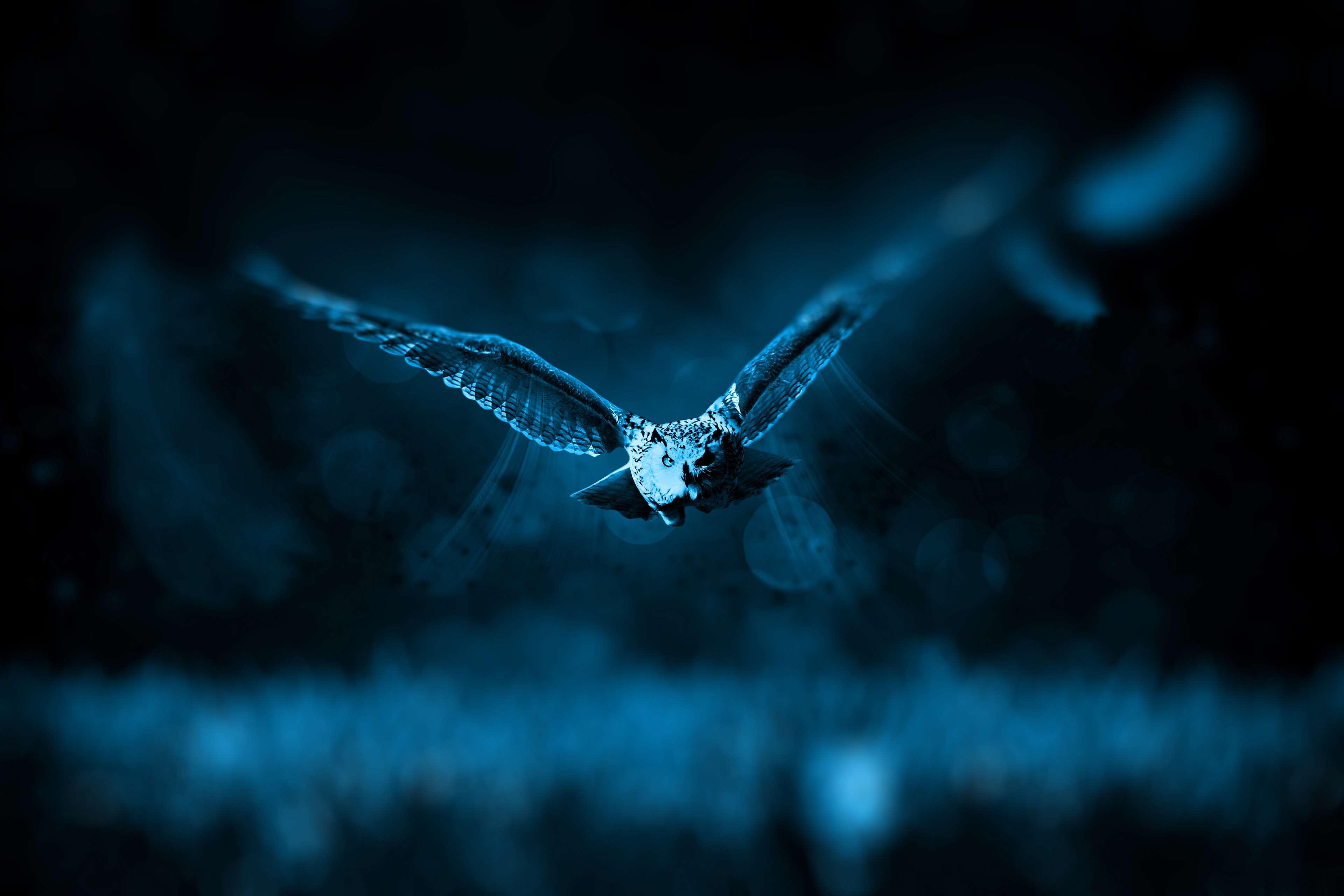 Animal Bird Dark Fly Night Owl Wild Animal 4k Fondo De