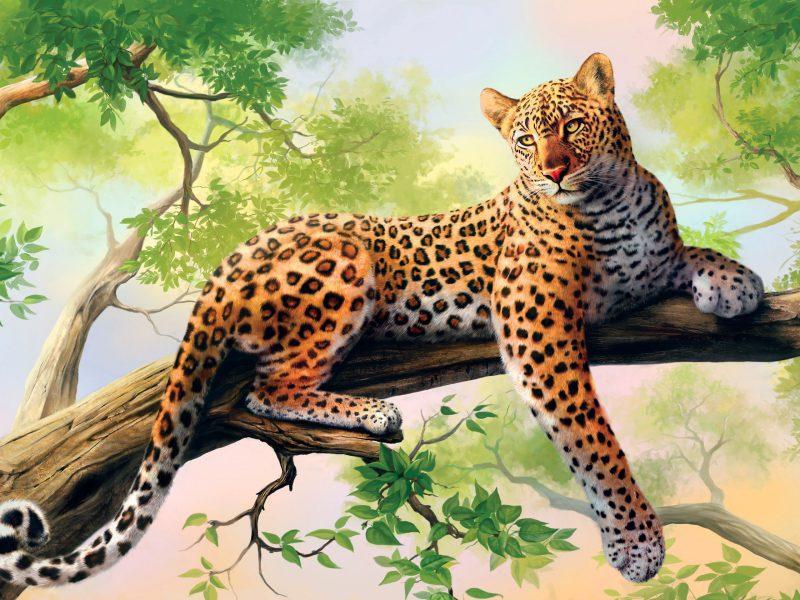 Hd Animal Wallpaper Free Download Beautiful Animals High