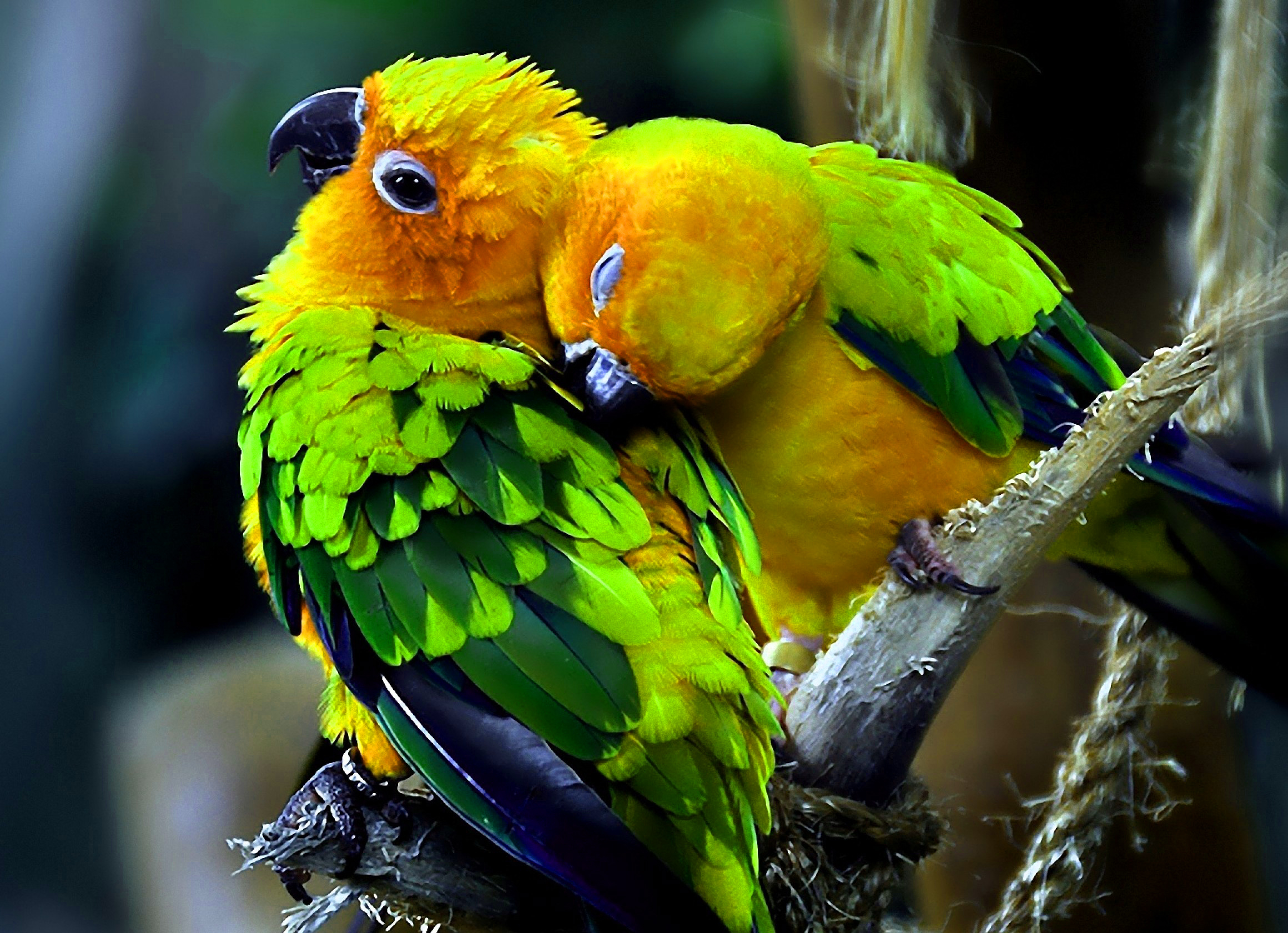 Beautiful Images For Whatsapp Dp With Flower Nature Parrot