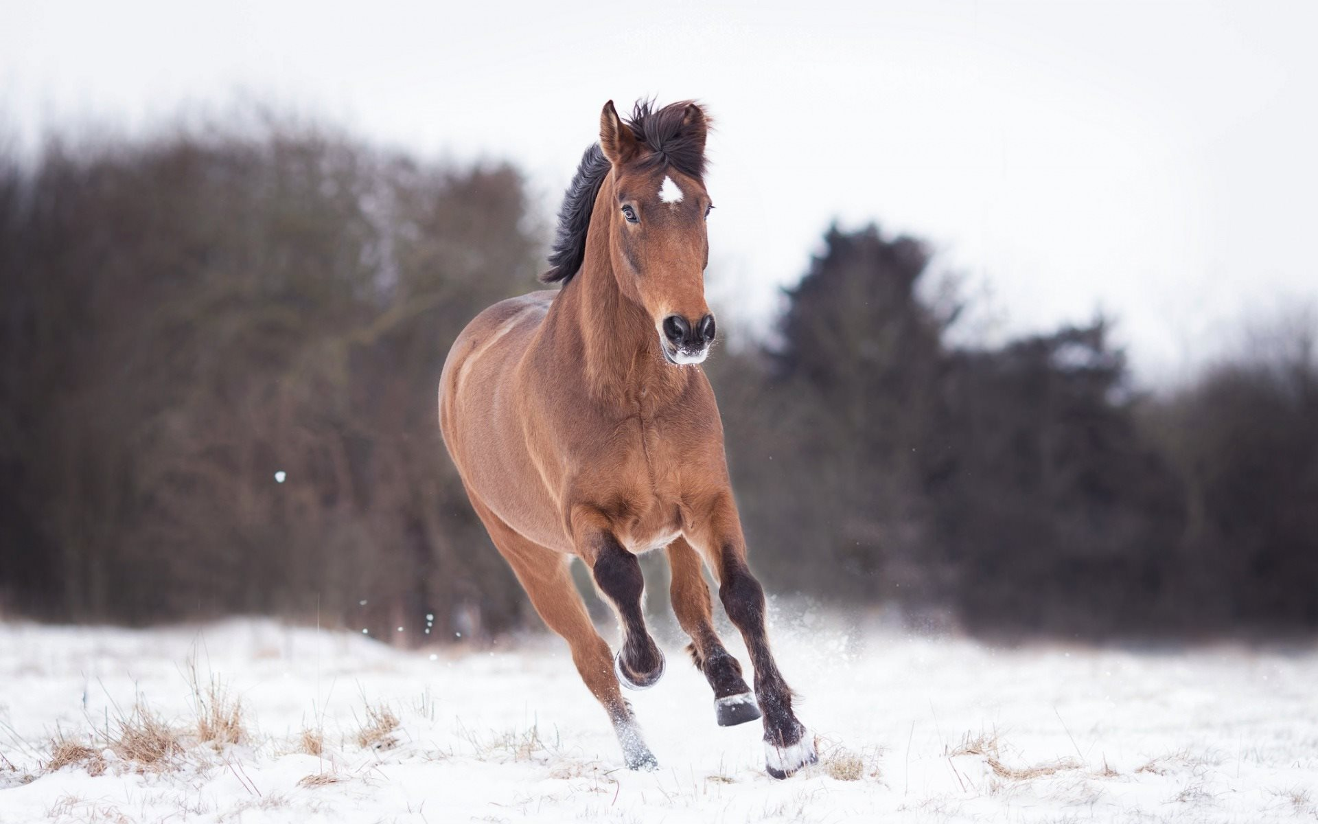 Download Wallpapers Running Horse Winter Snow Brown