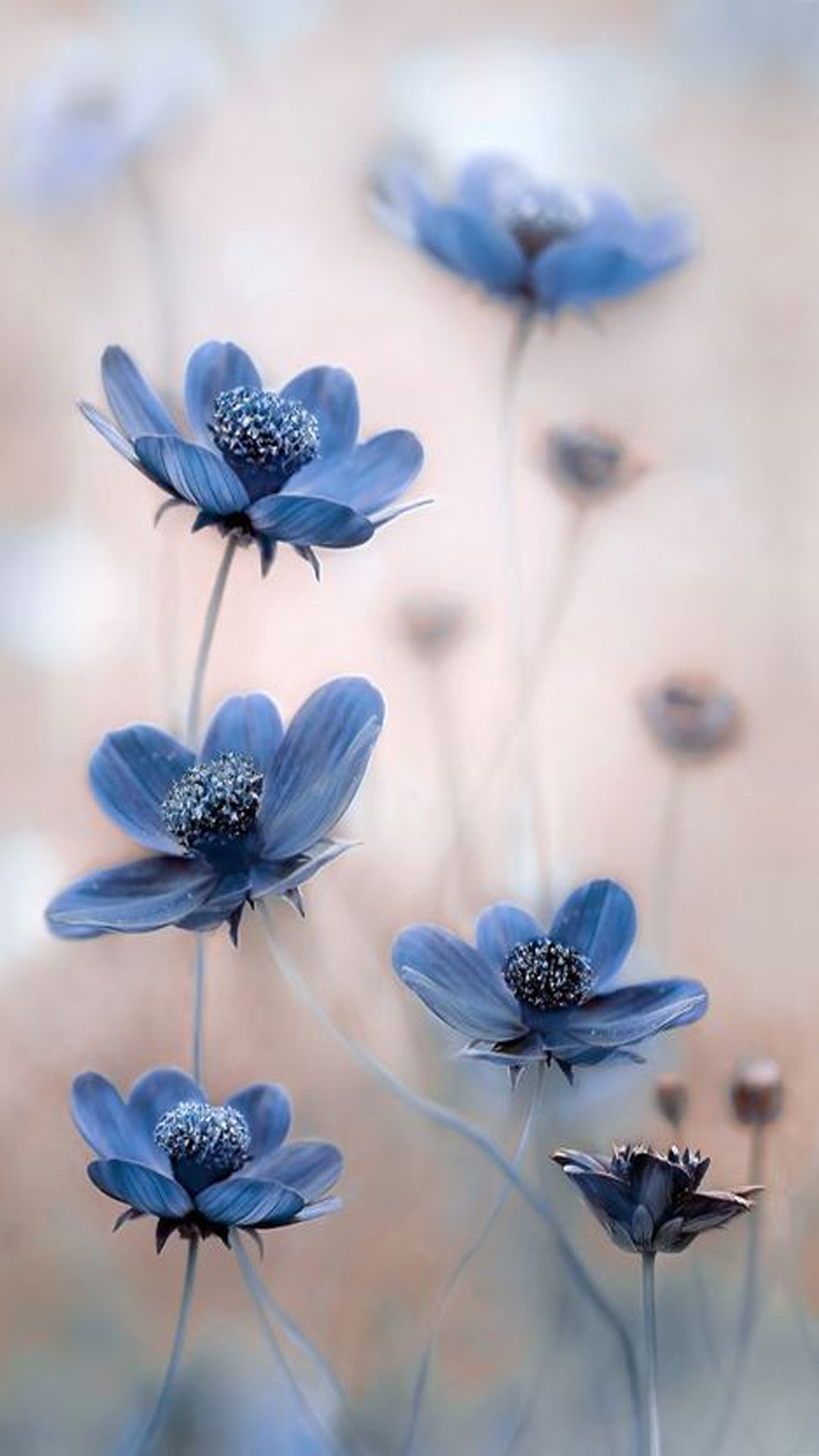 Blue Flowers Hd Mobile Wallpaper Hd Samsung Galaxy J2 2152118 Hd Wallpaper Backgrounds Download