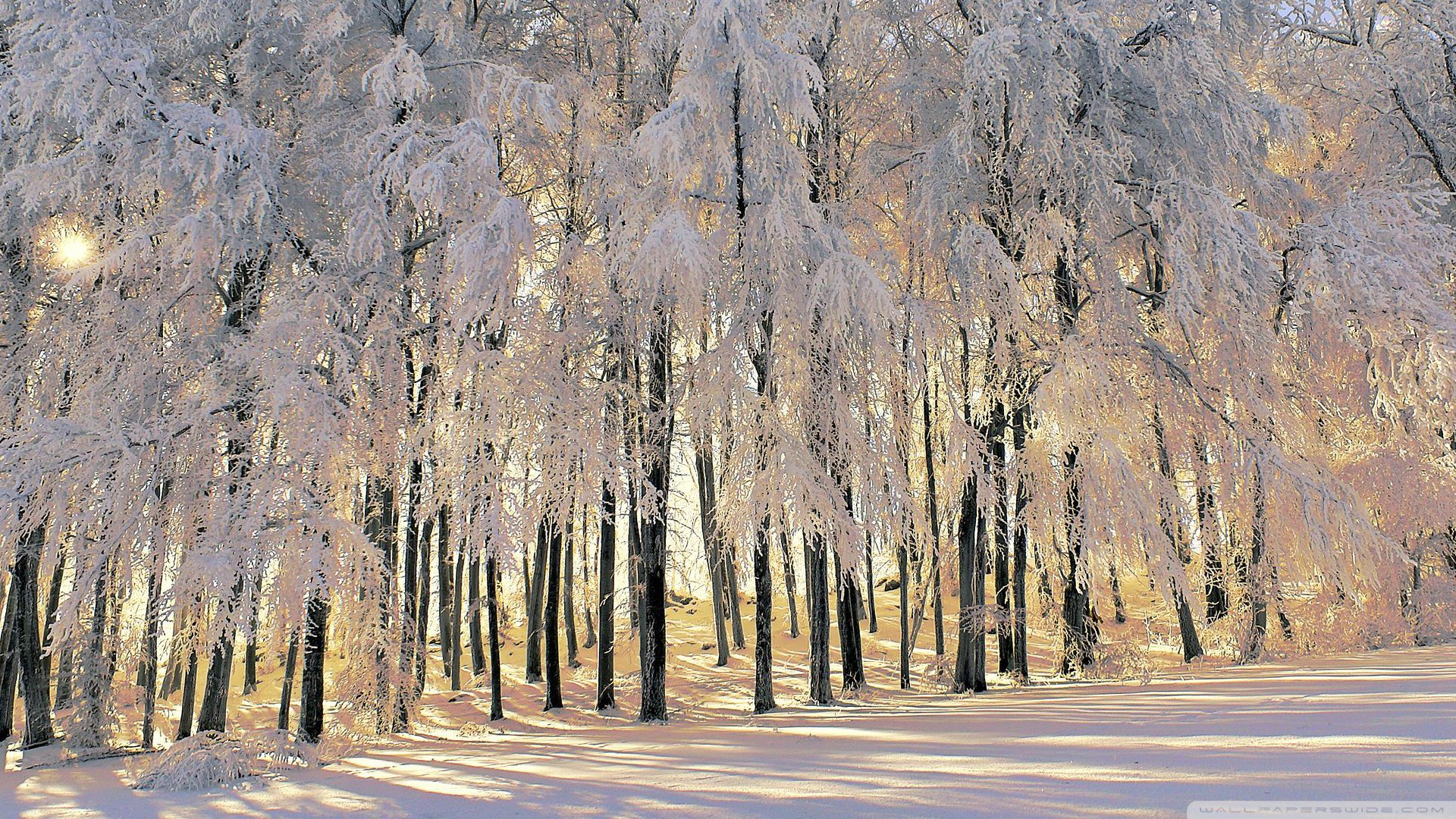 Winter Wallpapers Hd Good Quality Pictures Winter