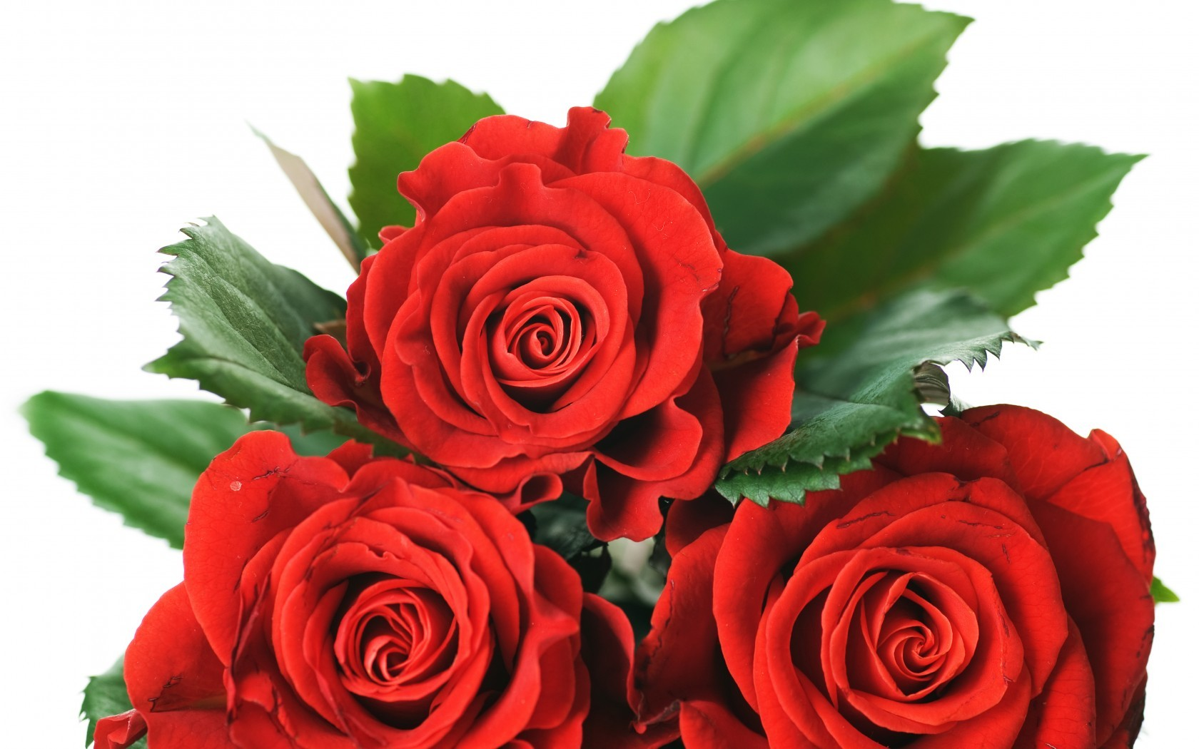 Valentine Red Special Roses Passion Love Amour Day - Rose Flower Images Downloading , HD Wallpaper & Backgrounds