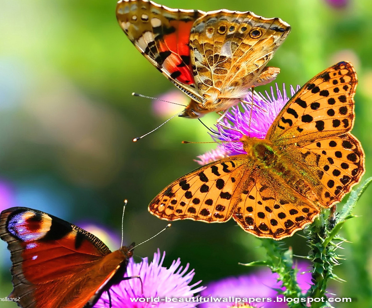 Beautiful Butterfly Pictures New Beautiful Wallpapers - Nature Animals Images Hd , HD Wallpaper & Backgrounds