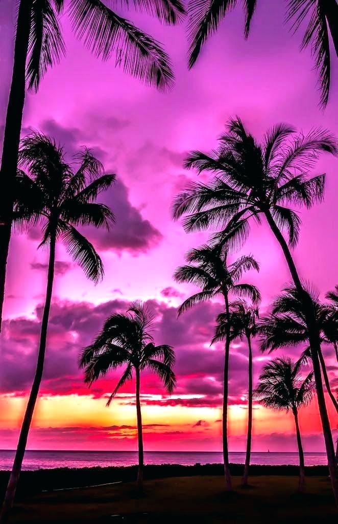 3d - Palm Tree Pink Sunset , HD Wallpaper & Backgrounds