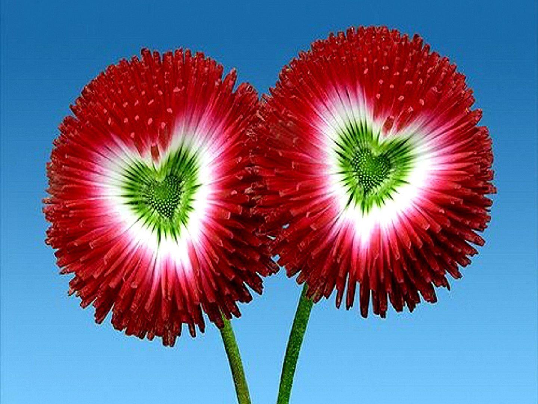 Flowers Green Heart Beautiful Flower Wallpapers Hd Beautiful Images Flowers Hd 2197967 Hd Wallpaper Backgrounds Download