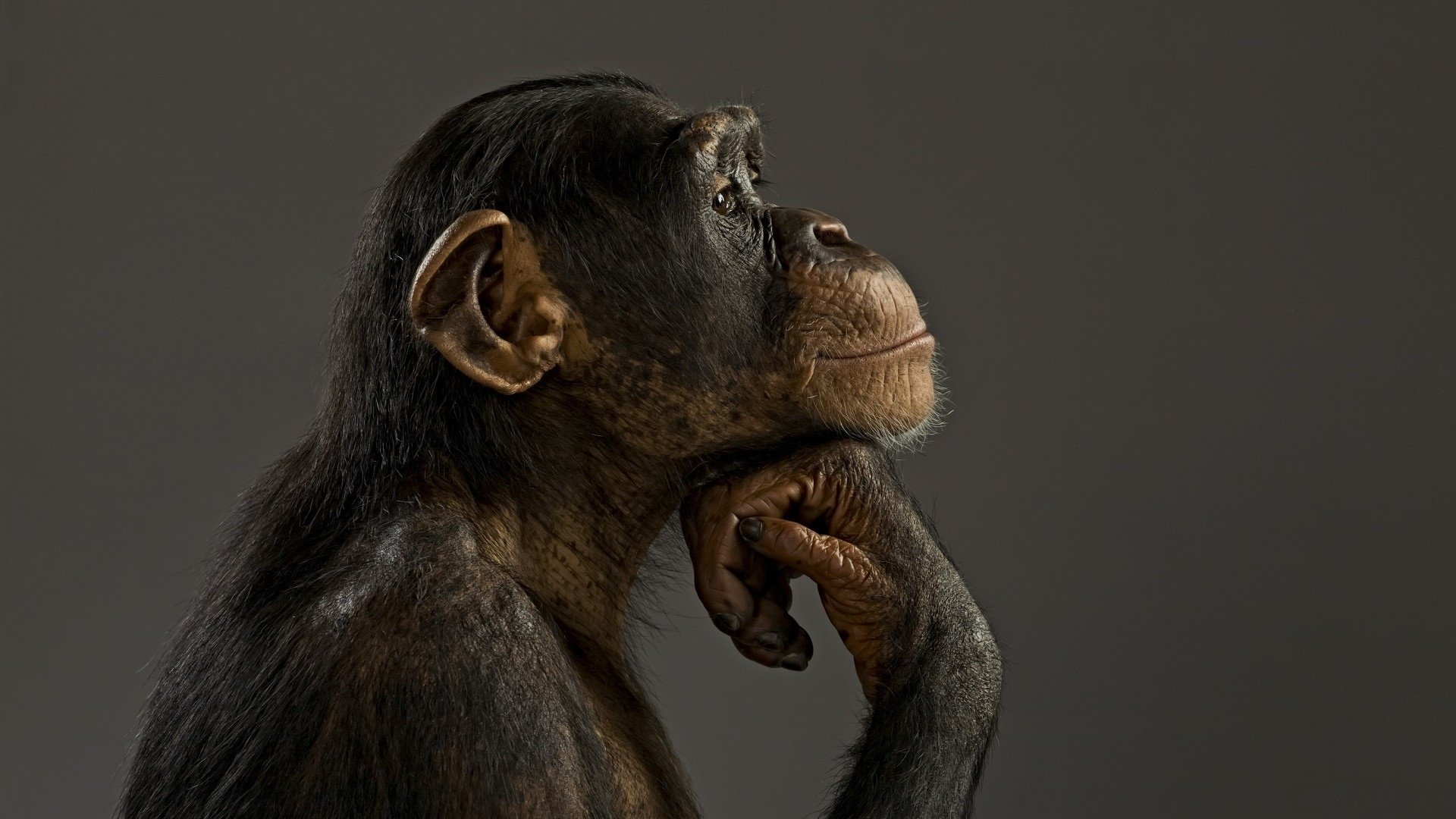 Thinking Cute Monkey 221926 Hd Wallpaper Backgrounds