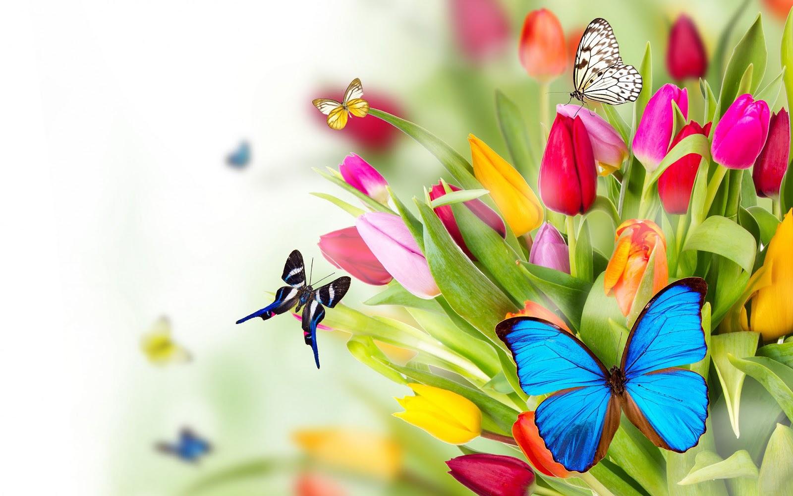 22 Lente Wallpapers Met Bloemen Mooie Leuke - Butterflies On The Flowers , HD Wallpaper & Backgrounds