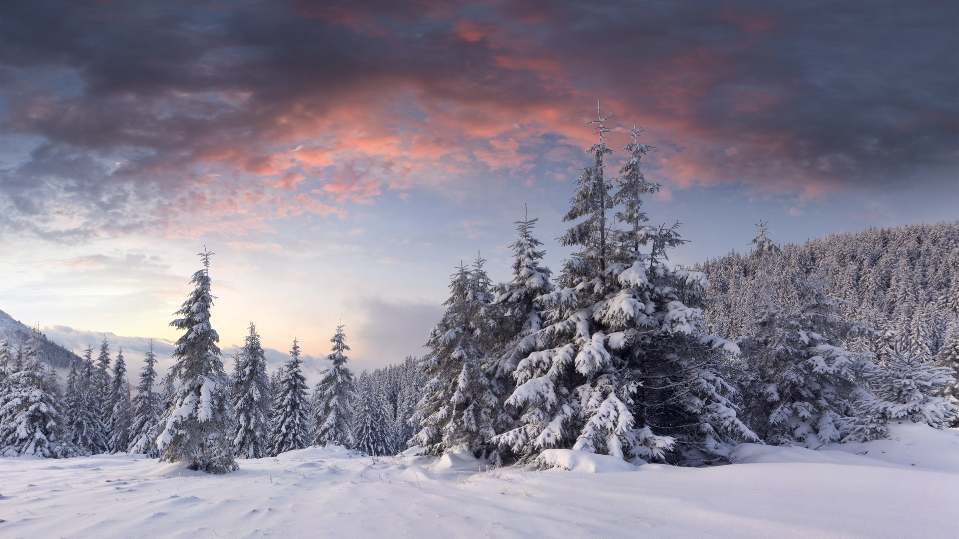 Winter Wallpaper Christmas Tree