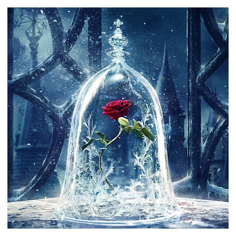 Beauty And The Beast Rose Wallpaper Beauty And The Beast