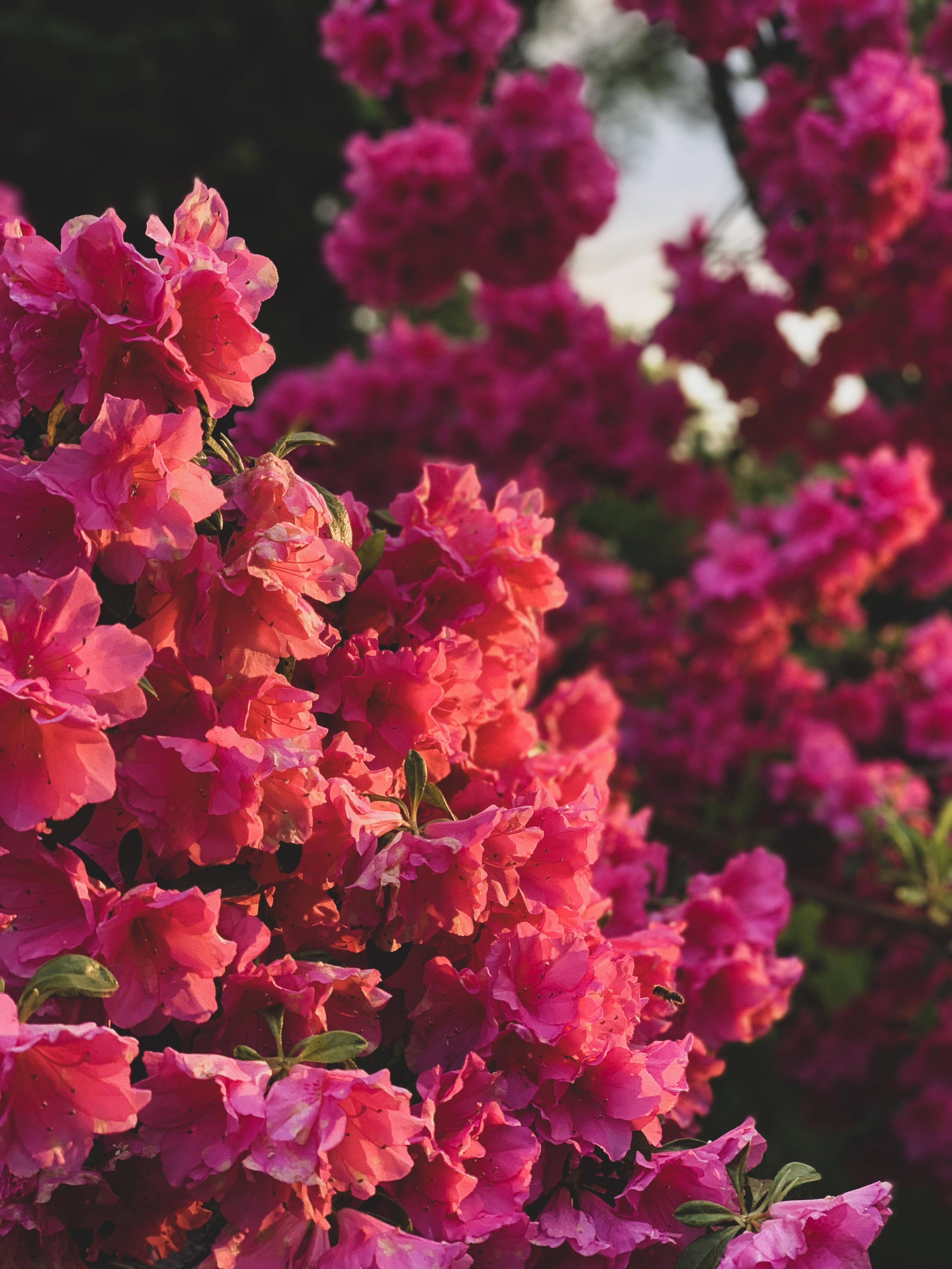 Iphone Aesthetic Flower Single Flower Wallpaper Hd
