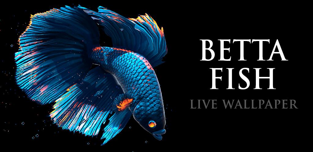 Betta Fish Live Wallpaper Apk , HD Wallpaper & Backgrounds
