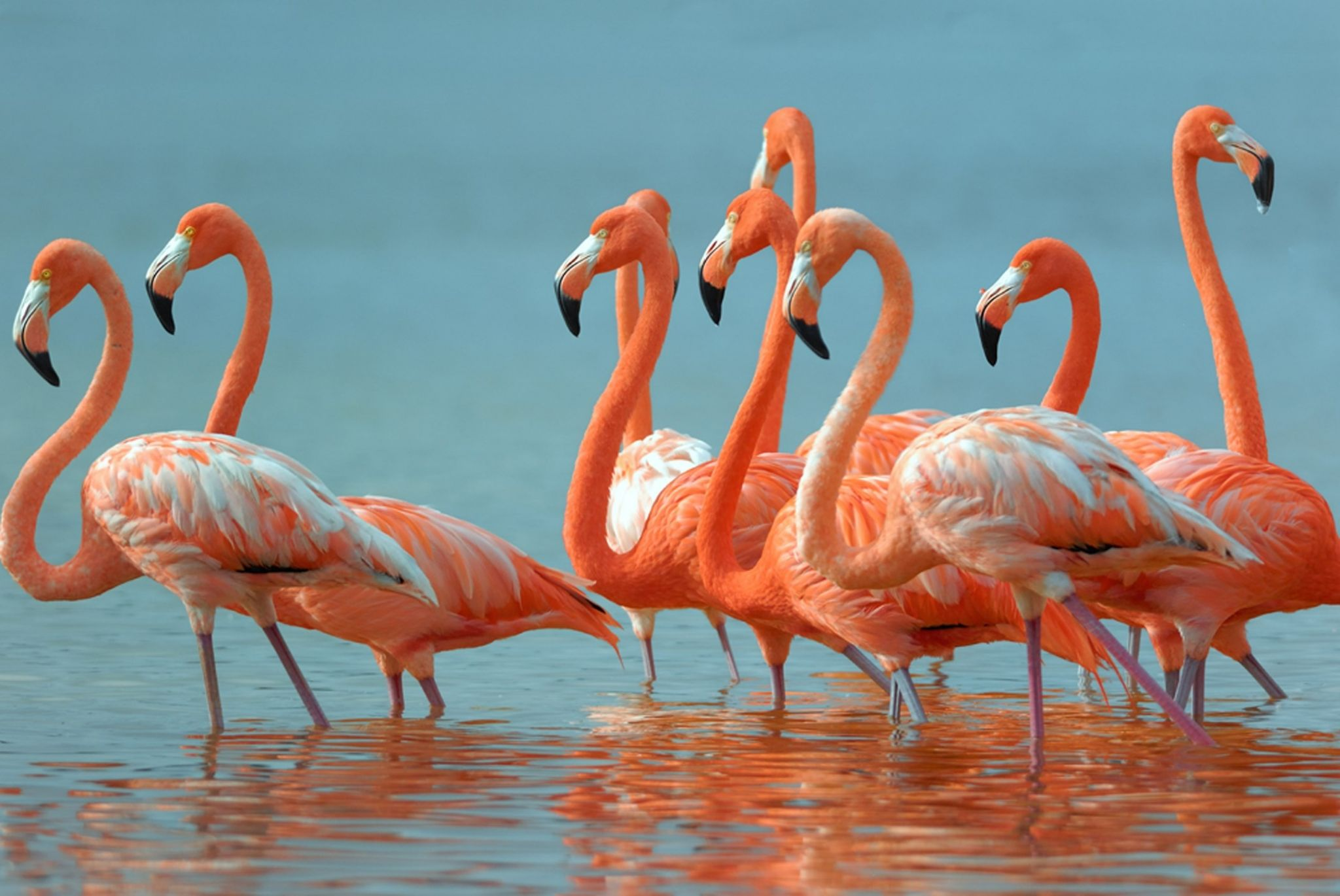 Flamingo Mexico 2270883 Hd Wallpaper Backgrounds Download
