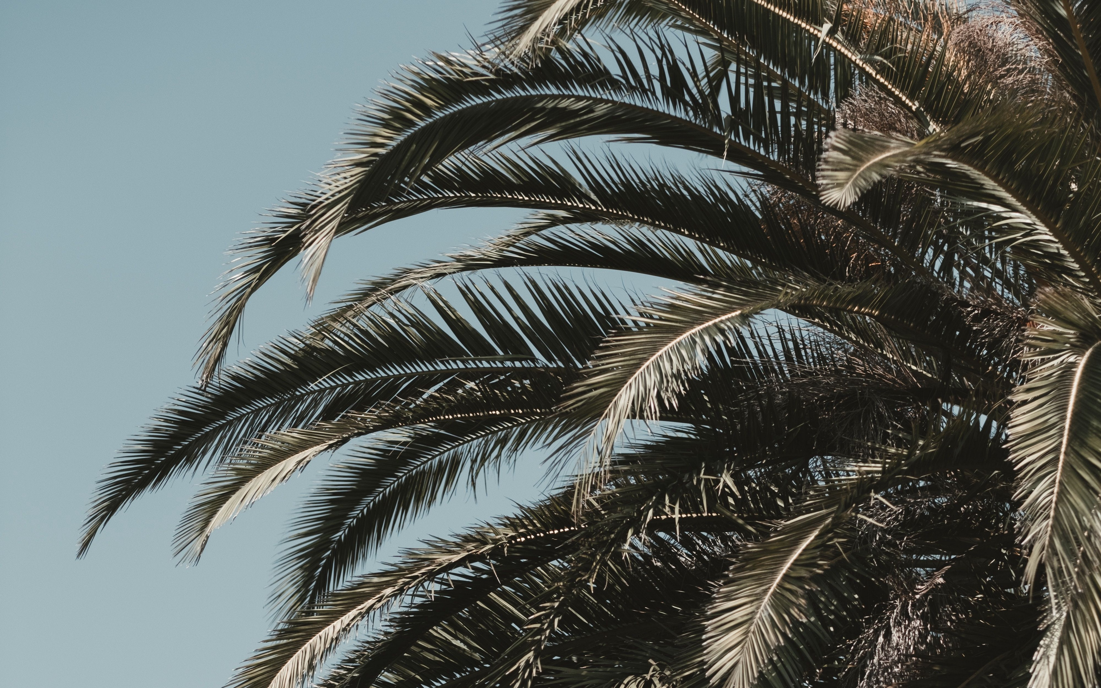 Palm Leaves Wallpapers 4k , HD Wallpaper & Backgrounds