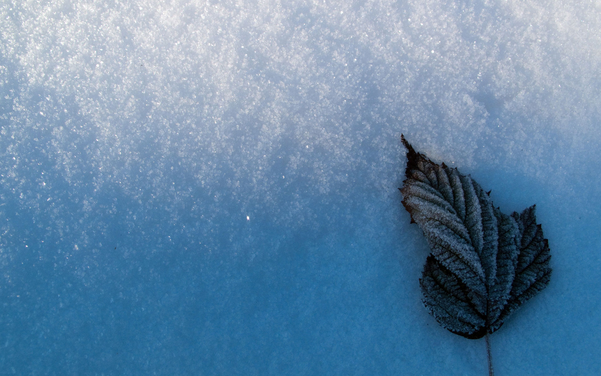 Leaf In The Snow 2289571 Hd Wallpaper Backgrounds