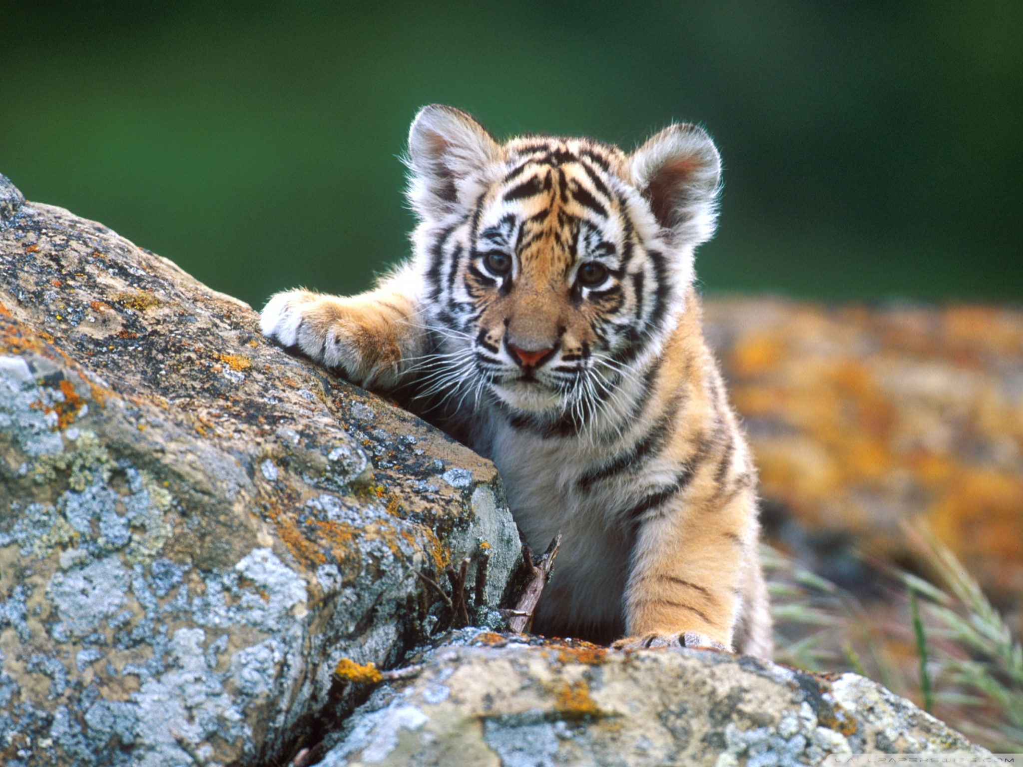 Cool Photos Of Animals , HD Wallpaper & Backgrounds