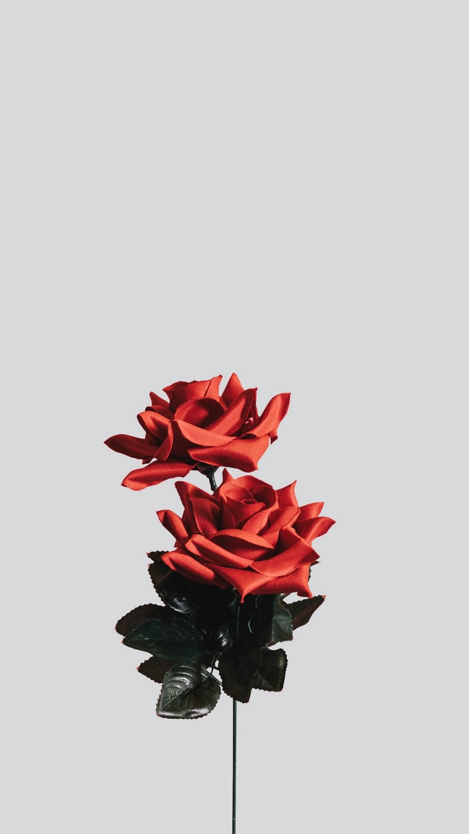 Wallpaper Rose, Flower, Artificial, Minimalism - Minimalist Flower Wallpaper Iphone , HD Wallpaper & Backgrounds
