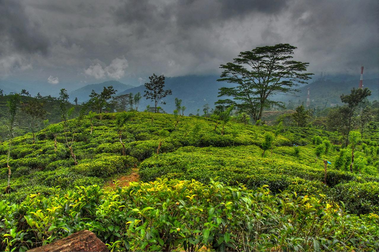 Wallpapers Sri Lanka Nature Sky Tropics Landscape Photography - Sri Lanka Nature , HD Wallpaper & Backgrounds