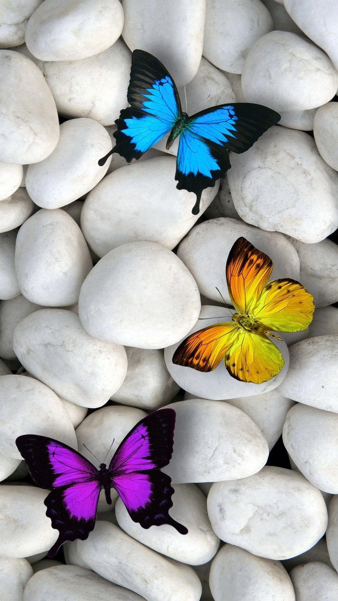 Butterfly Wallpaper Iphone , HD Wallpaper & Backgrounds