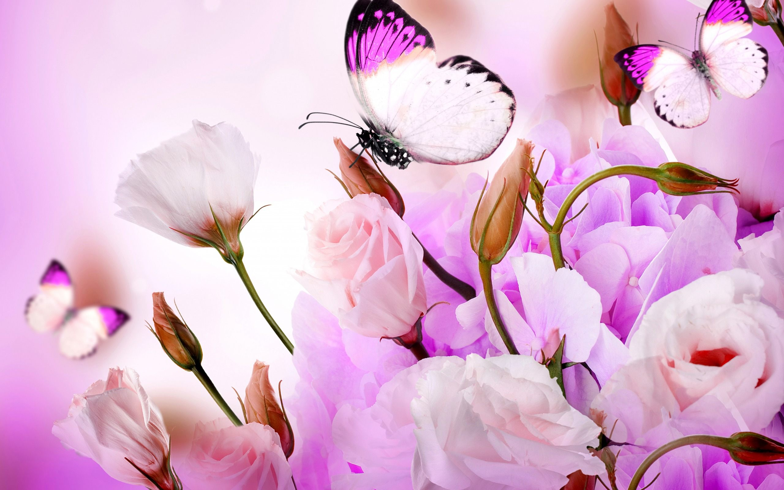 Butterfly Wallpaper - Full Hd Flowers And Butterfly , HD Wallpaper & Backgrounds